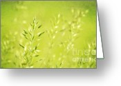 Pflanzen Greeting Cards - Impression of gras Greeting Card by Angela Doelling AD DESIGN Photo and PhotoArt