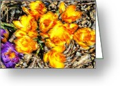 Yellow Crocus Greeting Cards - Impressionistic  Yellow Crocus Greeting Card by Barbara Griffin