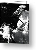 Wild Horses Greeting Cards - Impressions Greeting Card by Angel  Tarantella