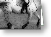 Dressage Photo Greeting Cards - Impulsion Greeting Card by East Coast Barrier Islands Betsy A Cutler