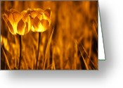 Warmth Greeting Cards - In a Perfect World Greeting Card by Photodream Art