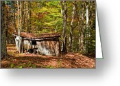 Shed Photo Greeting Cards - In Autumn Woods Greeting Card by Steve Harrington