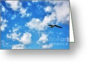 Baptize Greeting Cards - In Flight Greeting Card by Dan Stone