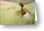 In Focus Greeting Cards - In Flight Greeting Card by John Kain