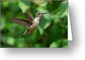 Sandy Keeton Greeting Cards - In Flight Greeting Card by Sandy Keeton