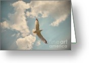 Seagull Photo Greeting Cards - In Flight Greeting Card by Tara Turner