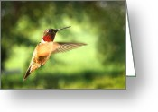 In Focus Greeting Cards - In His Element Greeting Card by Bill Pevlor