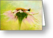 Echinacea Greeting Cards - In Perfect Harmony Greeting Card by Lois Bryan