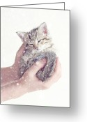 Gray Tabby Greeting Cards - In Safe Hands  Greeting Card by Amy Tyler