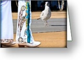 Seagull Photo Greeting Cards - In Search of Elvis Greeting Card by Bob Orsillo