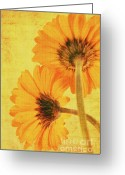 Decorativ Photo Greeting Cards - In summertime Greeting Card by Angela Doelling AD DESIGN Photo and PhotoArt
