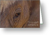 Safari Greeting Cards - In The Eye of the Elephant Greeting Card by Sandra Bronstein