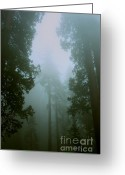 Biggest Tree Greeting Cards - In the forest Greeting Card by Hideaki Sakurai