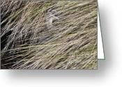Blue Heron Photo Greeting Cards - In The Grass Greeting Card by Deborah Benoit
