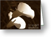 Calla Lily Greeting Cards - In the Light Calla Lilies Sepia Greeting Card by Jennie Marie Schell