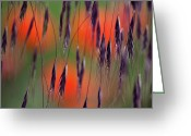 Square_format Greeting Cards - In the Meadow Greeting Card by Heiko Koehrer-Wagner
