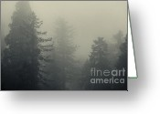 Biggest Tree Greeting Cards - In the mist - toning Greeting Card by Hideaki Sakurai