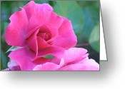 Rosaceae Greeting Cards - In the Pink Greeting Card by Rona Black