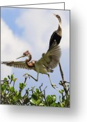 Heron.birds Greeting Cards - In The Rookery Greeting Card by Patrick M Lynch