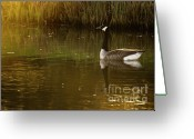 Wild Goose Greeting Cards - In The Setting Sun Greeting Card by Angel  Tarantella