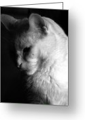 Black And White Cat Greeting Cards - In the shadows Greeting Card by Bob Orsillo