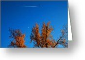 Trees Photograph Greeting Cards - In the sky Greeting Card by Toni Hopper