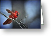 Red Bird Greeting Cards - In the still of the night . . . Greeting Card by Bonnie Barry