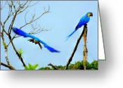Talking Birds Greeting Cards - In the Wild Greeting Card by Karen Wiles