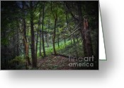 Ble Sky Greeting Cards - In To The Forest Greeting Card by Carol A Commins