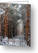 Winter Trees Mixed Media Greeting Cards - In to the Light Greeting Card by Svetlana Sewell