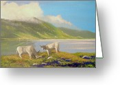 Co Galway Greeting Cards - Inagh Valley Cattle Greeting Card by Cathal O malley