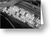 Kitchen Photos Greeting Cards - Indian Corn Black and White Greeting Card by James Bo Insogna