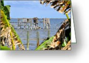Intercoastal Greeting Cards - Indian River Roost Greeting Card by David Lee Thompson