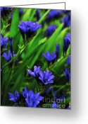 Blue Petals Greeting Cards - Indigo Blue on Green Greeting Card by Kaye Menner