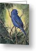  Bluebird Greeting Cards - Indigo Bunting Greeting Card by Sam Sidders