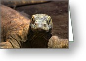 Photography Tk Designs Greeting Cards - Indonesian Komodo Dragon Greeting Card by Tracie Kaska