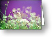 Wildflower Photography Greeting Cards - Infatuation in Purple Greeting Card by Amy Tyler