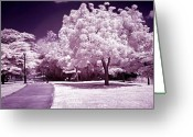Dekoration Greeting Cards - Infrared Garden Greeting Card by Riccardo Zullian