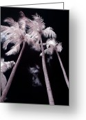 Abstract Nature Greeting Cards - Infrared Palm Trees Greeting Card by Adam Romanowicz
