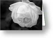 Flower Blossom Greeting Cards - Infrared Rose Blossom Greeting Card by Linda Phelps