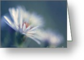 Daisies Greeting Cards - Innocence - 03 Greeting Card by Variance Collections