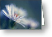 Daisies Greeting Cards - Innocence 03b Greeting Card by Variance Collections