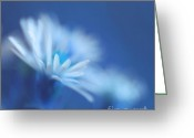Daisies Greeting Cards - Innocence 11b Greeting Card by Variance Collections