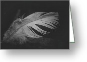 White Feather Greeting Cards - Innocence Lost Greeting Card by Odd Jeppesen