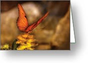 Butterfly Greeting Cards - Insect - Butterfly - Just a bit of orange  Greeting Card by Mike Savad