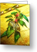 Ym_art Greeting Cards - Insect - Butterfly - Sparrow - Happy Summer  Greeting Card by Yvon -aka- Yanieck  Mariani