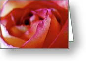 Colorful Roses Greeting Cards - Inside Edge Greeting Card by Rona Black