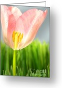 March Greeting Cards - Inside of a pink tulip Greeting Card by Sandra Cunningham