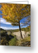 Inspiration Point Greeting Cards - Inspiration Point Greeting Card by Louise Heusinkveld