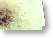 Iphonesia Greeting Cards - Instagram Photo - Dreamy Dandelion  Greeting Card by Marianna Mills